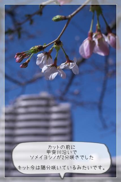 春のカット09
