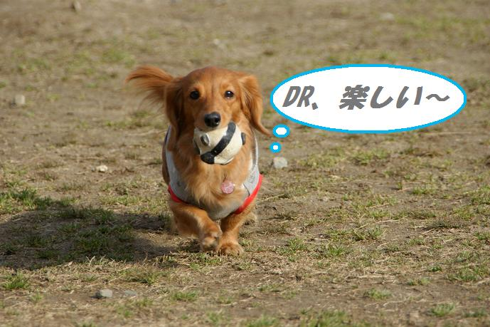 高雄DR 5