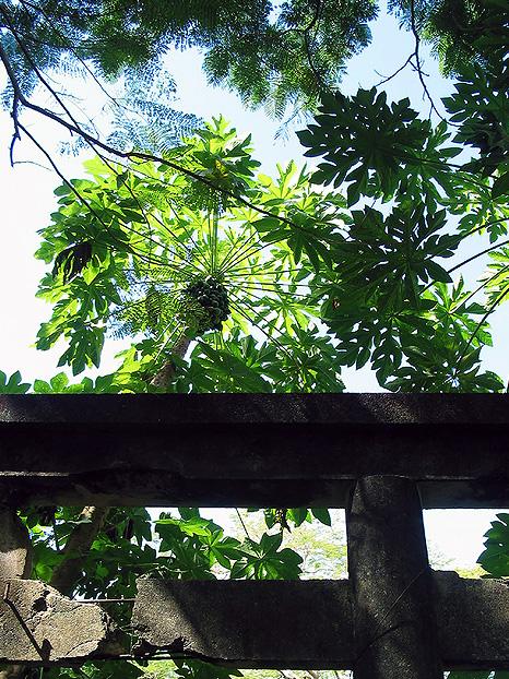 NKK神社(日の出神社)