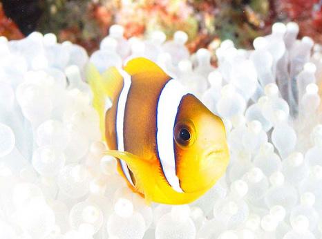 orangefin.jpg