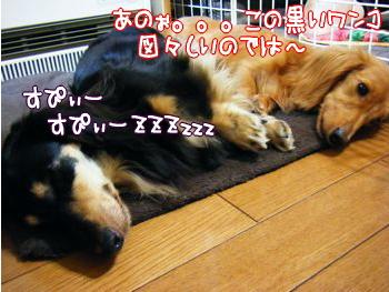 くーちゃん&ノエル