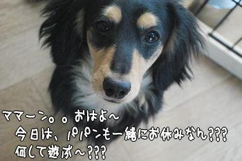 DSC_2613.jpg