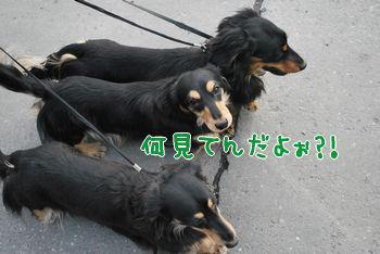 DSC_2824.jpg
