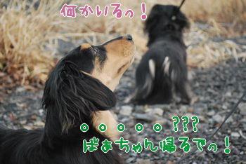 DSC_2872.jpg