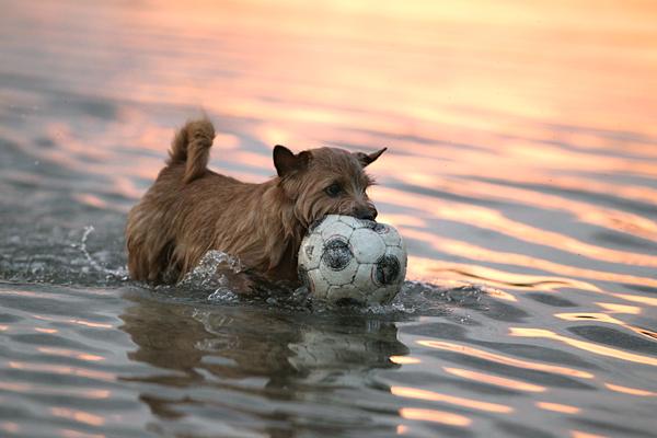 夕暮れ、ボール&水狂い