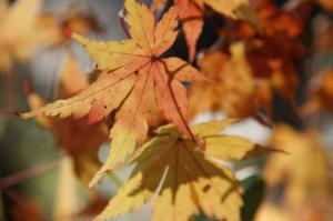 秋だねぇ~♪