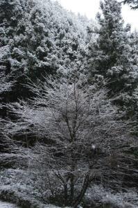 雪げし木~