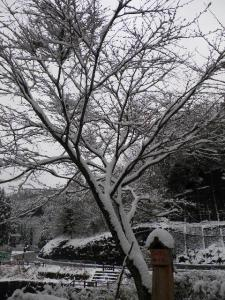 ちょいまるの家も雪かきせねば!