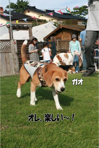 10_20101004222710.jpg