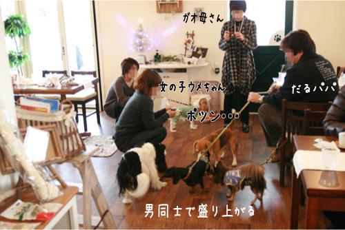 15_20101227211635.jpg