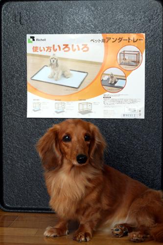 1_20100120113854.jpg