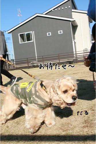 22_20101116224637.jpg