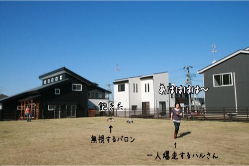 33_20101116223722.jpg