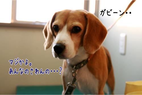 42_20101231192445.jpg