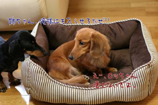 4_20091027000611.jpg