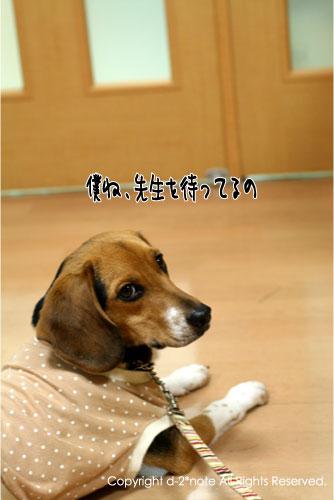 5_20091114224756.jpg