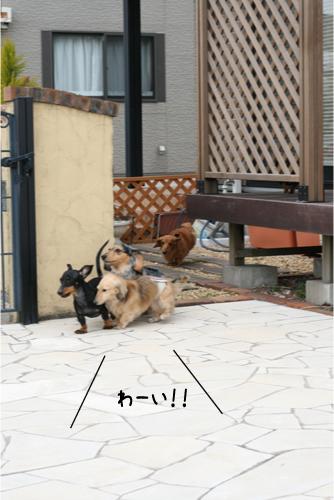 5_20100329191001.jpg