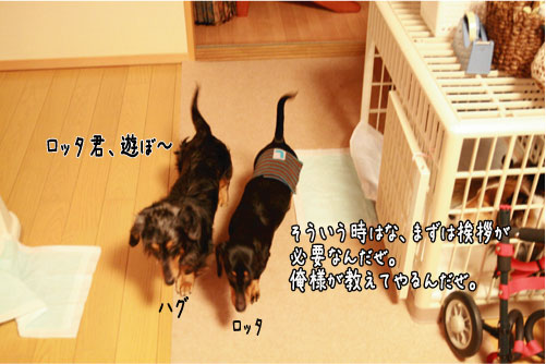 5_20110203211533.jpg