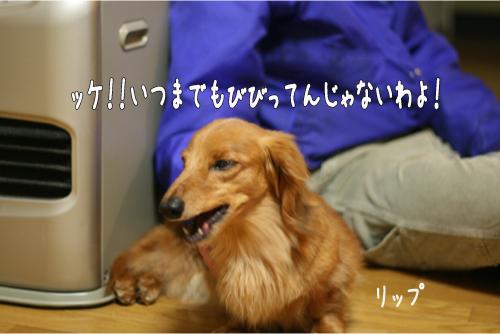 7_20100414211334.jpg