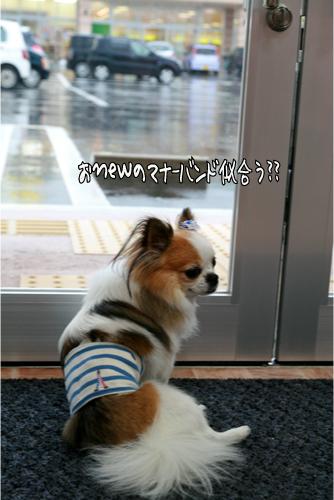 8_20101028212608.jpg