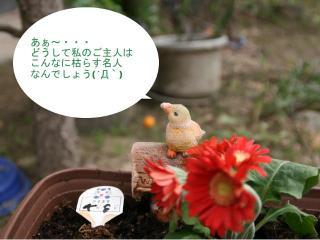 2012.04.15 次男坊鉢撮影.jpg