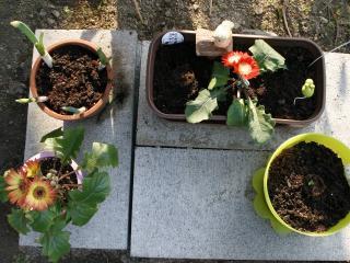 2012.04.19 親子花壇全体の様子.jpg