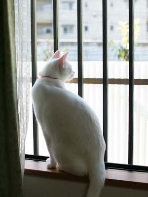 cat1294