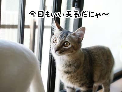 cat1295