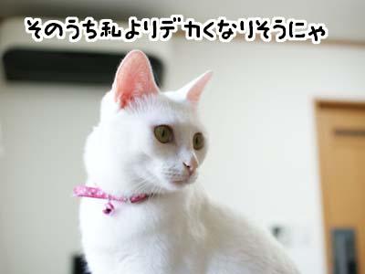 cat1299