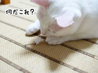 cat1301