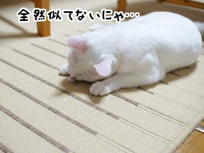 cat1302