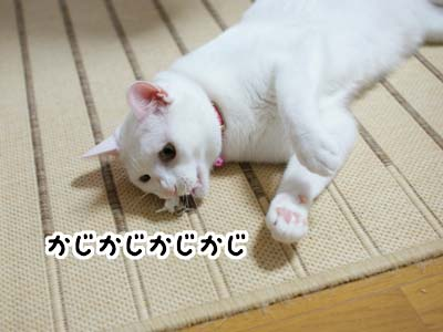 cat1303