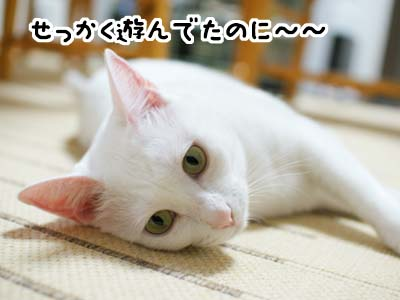 cat1304