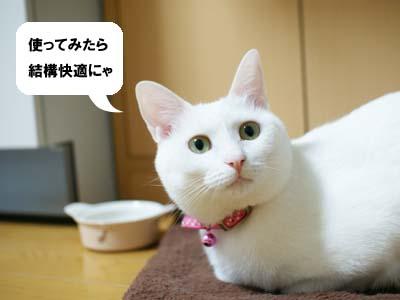 cat1306