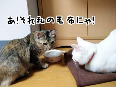 cat1307