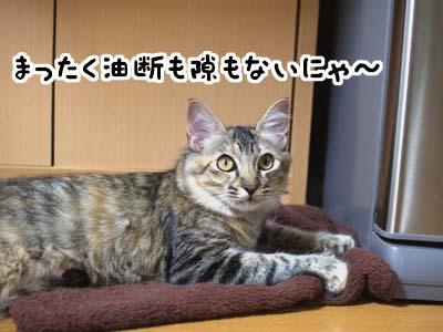 cat1308