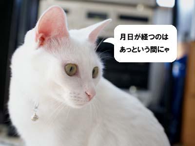 cat1316
