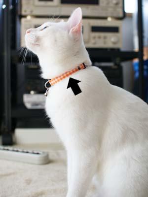 cat1317