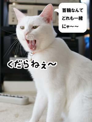cat1319