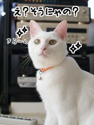 cat1320