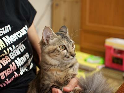 cat1327