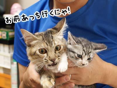 cat1328