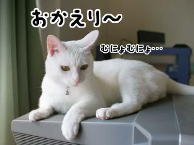 cat1331