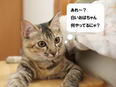 cat1337