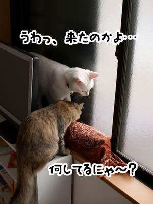 cat1338