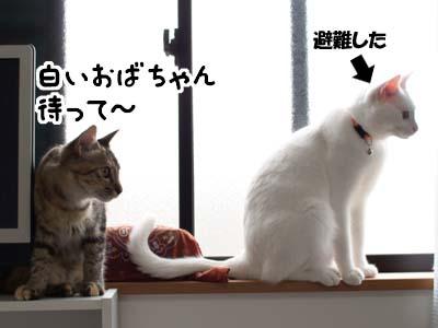cat1340