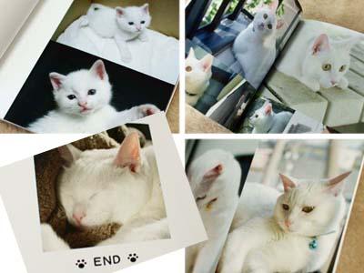 cat1342