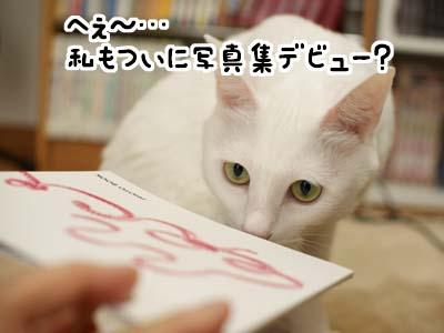 cat1343
