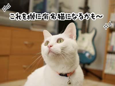 cat1344
