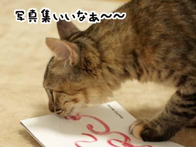 cat1345